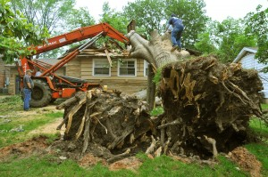 Fallen Tree On House, Sadly It Was Too Late For Preventative Measures, Don't Let This Be You!