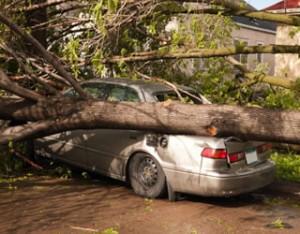 fallen tree, tree fell over, property damage