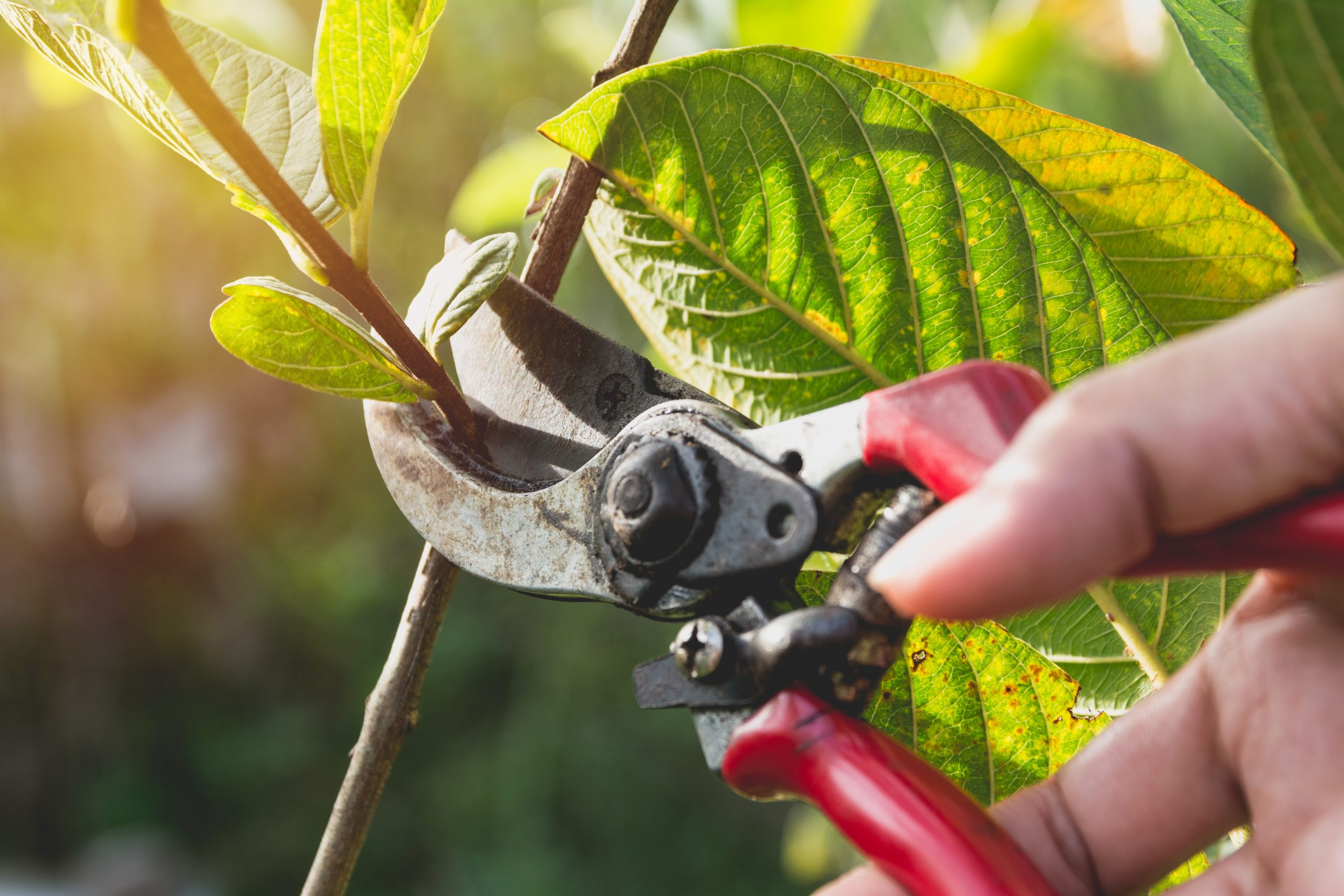 tree pruning austin tx tree pruning company texas tree pruning austin