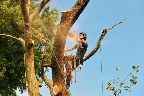 tree removal Austin TX